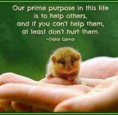 Help do not hurt Dalai Lama